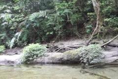 Águas cristalinas no rio Jaguareguava.