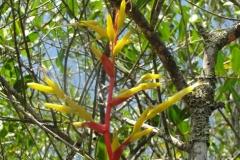 27-Flordabromelia