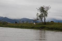 Pastos à margem do rio: o desmatamento, a erosão nas margens e o assoreamento do rio.
