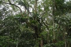 exploracao-alto-itapanhau12