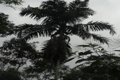exploracao-alto-itapanhau15