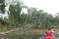 RA-Canoagem-Expedicao-Alto-Itapanhau-46