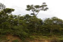 RA-Canoagem-Expedicao-Alto-Itapanhau-81