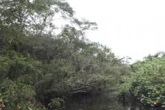 RA-Canoagem-Rio-Itaguare-18
