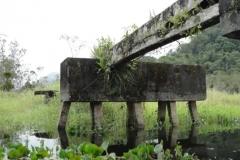 RA-Canoagem-Rio-Bichoro-31
