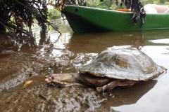 ra-canoagem-rio-jaguareguava-22-1