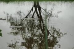 ra-canoagem-rio-jacare-pepira-05