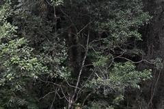 racanoagem-rio-claro-02-1
