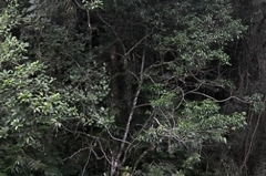 racanoagem-rio-claro-02