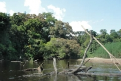 ra-canoagem-rio-itapanhau-40